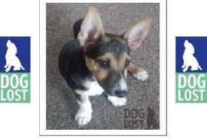 15-week-old puppy Moley has been missing for three weeks.