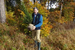 Tweed Forum's Derek Robeson holding a native Yew tree ready for planting.