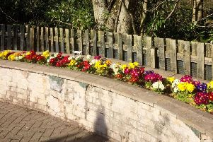 Some bedding plants at the Carers' Garden