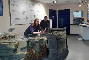 Staff admire the new touch pools which are ready for the holiday visitors.