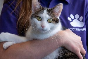 The Scottish SPCA stops rehoming animals over Christmas and New Year.