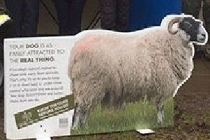 Sheep Worrying campaign launched.