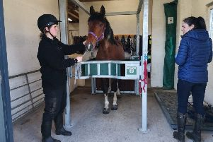 The expansion of the equine vet room at Drumoak was recently completed