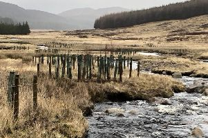 Tree enclosures at Allt Darrarie, a tributary of the River Muick. Picture: River Dee Trust