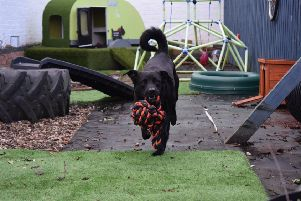A dog enjoying one of the Scottish SPCA's sensory gardens