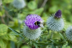 The council says the conservation of pollinators continues to be a priority