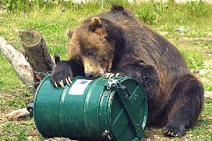 A bear tries to open a secure rubbish bin in Alaska (Picture: Al Grillo/AP)
