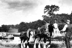 Horses on the canal in Falkirk in the 1950's.