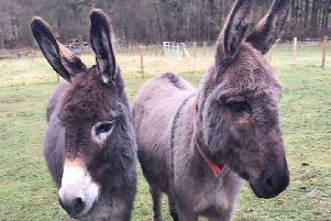 Two of the donkeys at Newparks Farm