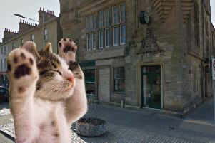 A cat cafe could soon be coming to Fife.