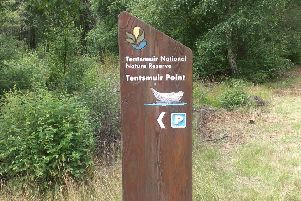 Fife Coastal Path'Tenstmuir Forest