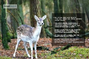 Drivers in  Ayrshire are being advised to look out for deer wandering onto major roads during May.