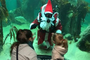 Join in the festive fun with Santa at Macduff Marine Aquarium