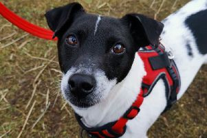 Rebel spent 356 days at the Scottish SPCA centre
