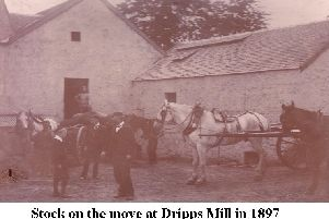 Stock on the move at Dripps Mills in 1897.