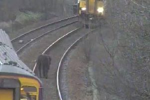 Passengers were delayed due to Highland cows on the railway tracks.  Picture: ScotRail