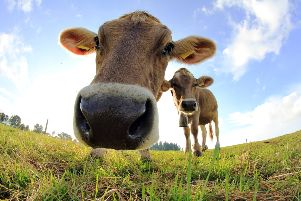 How now? Good news for Galloway's vital dairy industry with �8m investment