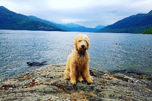 Cuillin is an adventurous puppy who loves the outdoors