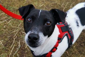 Rebel is settling into his new home. Picture: Scottish SPCA