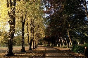 The council is proposing new ways of managing the region's green spaces.