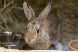 The Scottish SPCA says people should not buy rabbits on impulse