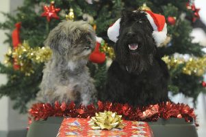 Pets and Christmas don't always go together quite as well as this.