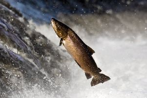 The sector is facing a number of significant challenges, including a decline in the number of salmon.