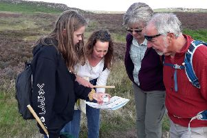 Volunteers gather vital data about bumblebees on a BeeWalk survey.