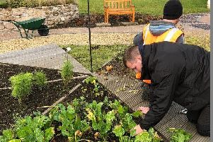 Volunteers growing vegetables at Cleland Hospital. Pic: Clydesdale Community Initiatives
