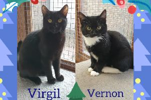 Virgil and Vernon are among the many cats being looked after by Cats Protection's Lanarkshire Branch who are hoping to find their forever home