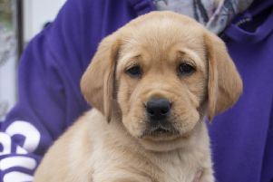 Canine Partners is looking for 'parents' to care for and train puppies.
