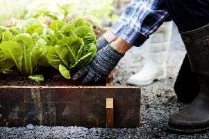 With the right knowledge it's possible to grow all manner of fruit and vegetables in Scotland (Photo: Shutterstock)