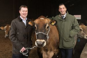 Group buying director of Aldi Scotland Graham Nicolson and Robert Graham of Graham's the Family Dairy down on the farm among dairy cows near Stirling. Picture: Contributed