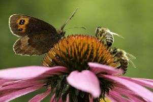 Butterflies and bees are two of the insects most affected by the dominance of human beings across the planet scientists have found. Picture: Getty