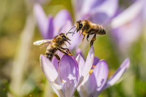 The planet is facing a man-made ecological crisis, highlighted by massive declines in insects and other wildlife. Picture: Frank Rumpenhorst/Getty Images