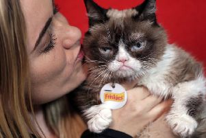 Grumpy Cat, an internet star from 2012, is featuring in the 30th anniversary celebrations of the invention of the World Wide Web (Picture: Richard Drew/AP)