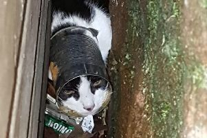 Scottish cat cowers behind shed after getting tin can stuck on its head