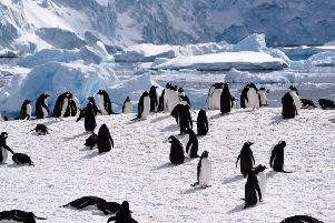 A penguin colony in Antarctica, where the impacts of pollution and global warming are evident