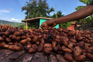 Ecometrica will launch a tool to monitor forests using satellite technology help cocoa companies end deforestation. Picture: Lewis Rattray