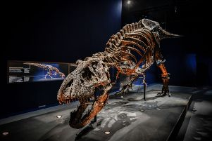 T-Rex skeleton arrives in Glasgow on what may be last tour