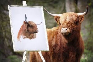 Magnificent Highland beast Skye ' the reigning Breed Champion ' will be one of the main attractions at the Royal Highland Show