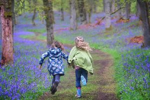 12 beautiful bluebell woods in Scotland to visit now