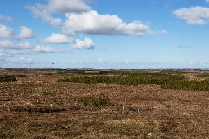 The trees planted near Stornoway, Isles of Lewis, under the Crofter Forestry Act which helped to transform the fortunes of crofters as well as the island landscape.