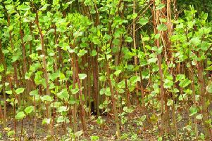 Japanese knotweed rules change after knocking thousands off house prices