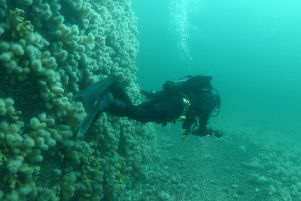 A diver surveys the seabed in Loch Carron. Picture: Howard Wood