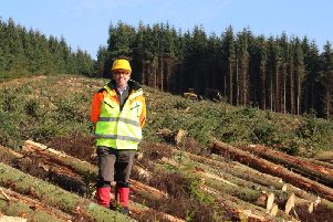 Ralland Browne, MD of Scottish Woodlands, at a harvesting site near Jedburgh in the Scottish Borders. Picture: Contributed