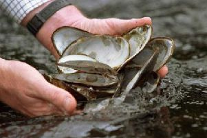Mussels. Picture:Contributed
