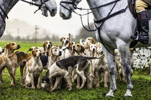A Fox hunt. Picture: Getty
