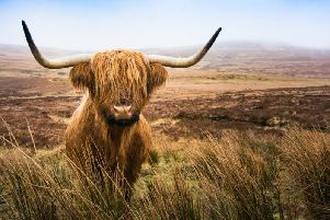 Yer aywis at the coos tail - you're always late. (Picture: Shutterstock)