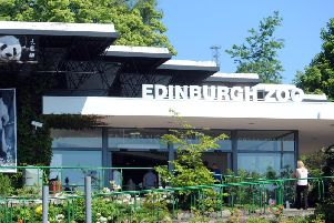Edinburgh Zoo has witnessed a marked increase in the number of one star reviews. Picture: TSPL